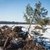 В Москве пройдет фотовыставка «Алгоритмы органического»