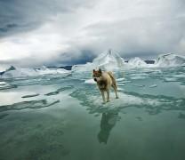 Арктика без иллюзий