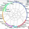 Станции Большой кольцевой линии метро построят за 4-5 лет